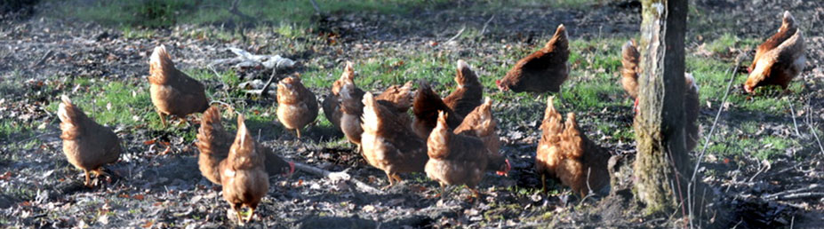 caption14